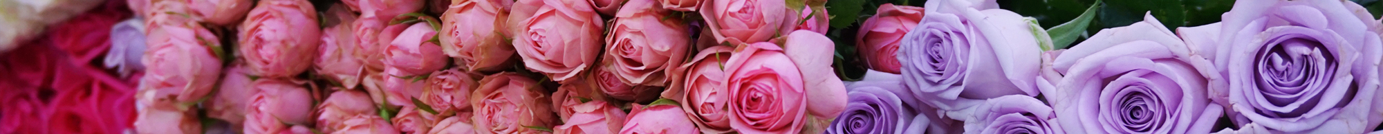 roses stacked up in a flower market